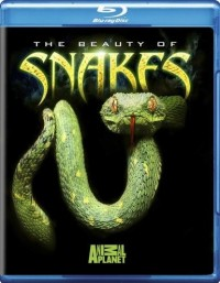 Beauty of Snakes, The (2008)