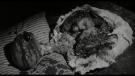 Mazací hlava (Eraserhead, 1977)