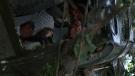 Predátor (Predator, 1987)