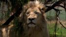Bílý lev (White Lion, 2010)