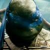 Želvy Ninja (recenze Blu-ray)