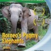 Borneo's Pygmy Elephants (2009)