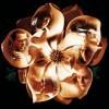 Magnolia konečně rozvine své květy na Blu-ray